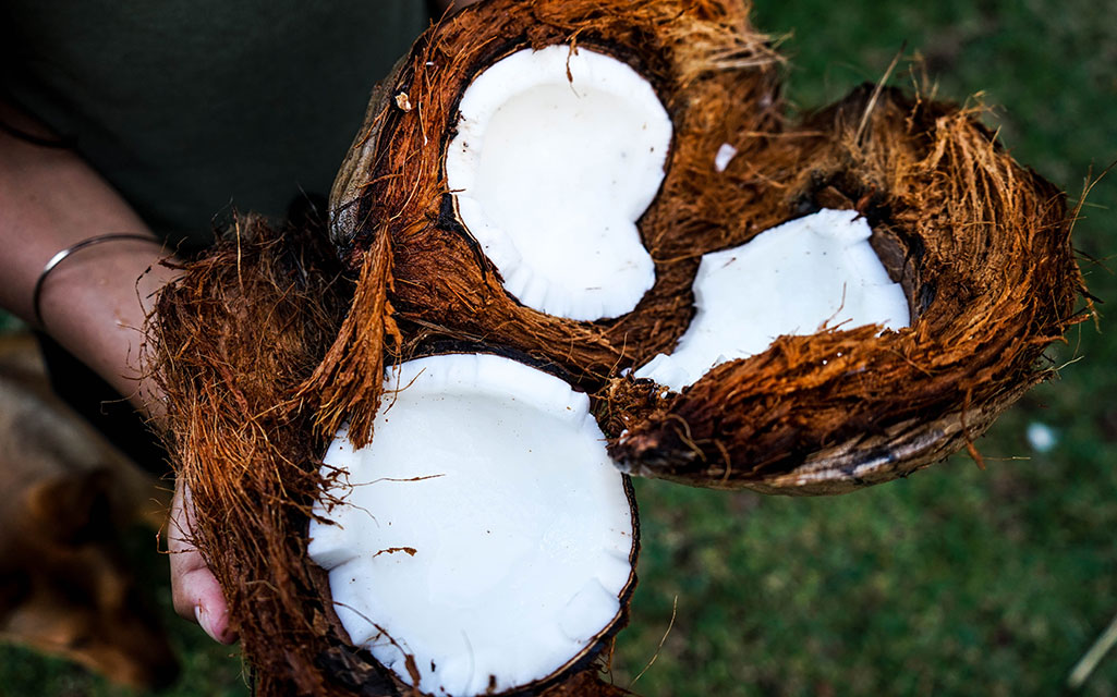 When to Introduce Coconut Oil on the GAPS Diet